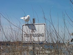 seagull-342183__180